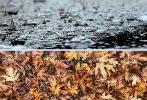 Middlesex County gutter cleaning reasons shows heavy rains in top half and fallen leaves covering ground in bottom half